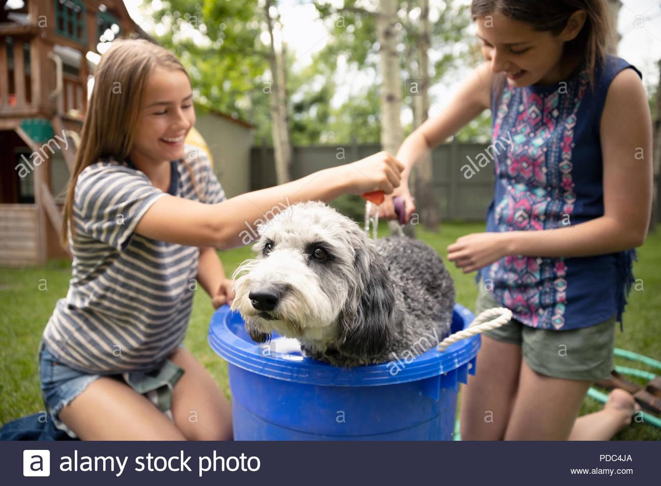 Tween girl friends giving dog bath in backyard - Stock Image