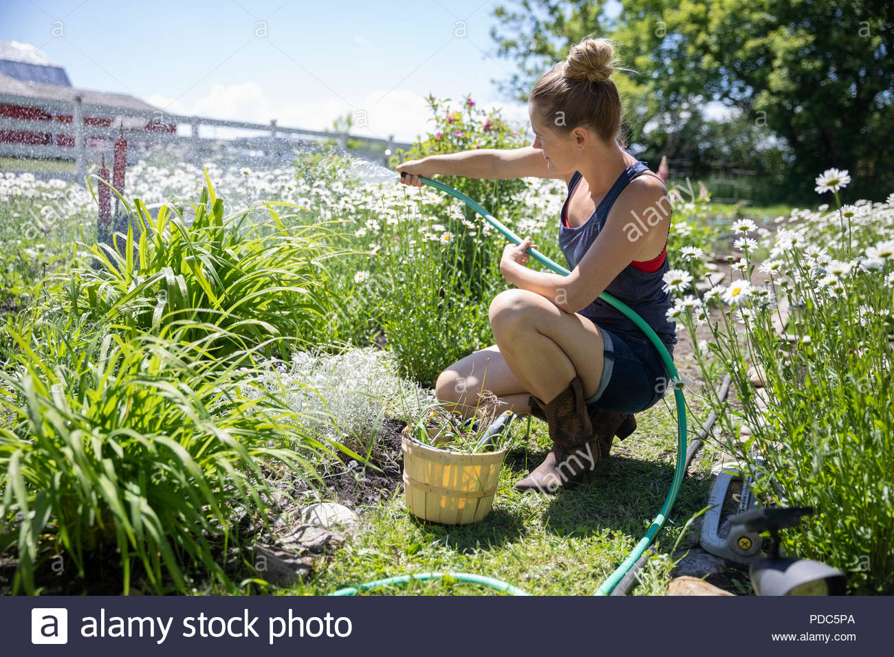 Woman gardening, watering flowers and plants in sunny rural garden - Stock Image
