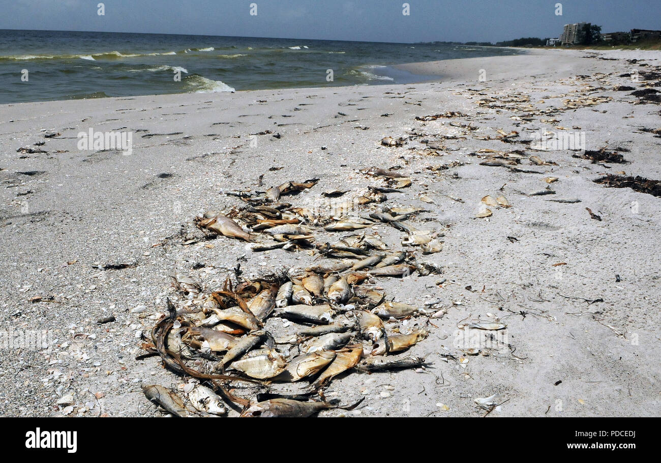 red tide longboat key beach