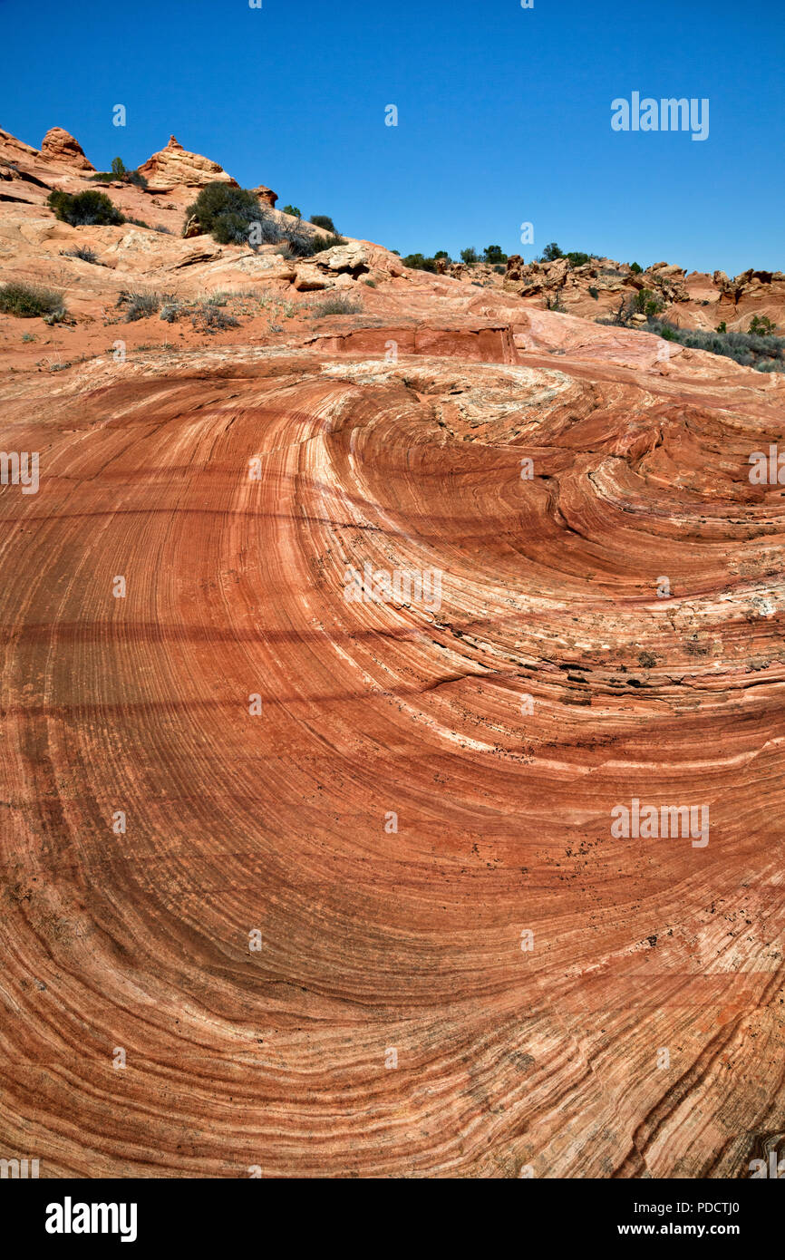 AZ00219-00...ARIZONA - Swirl patterns left by the collapse of an ancient sanddune in the Cottonwood Cove section of the Coyote Buttes in the Paria Can Stock Photo