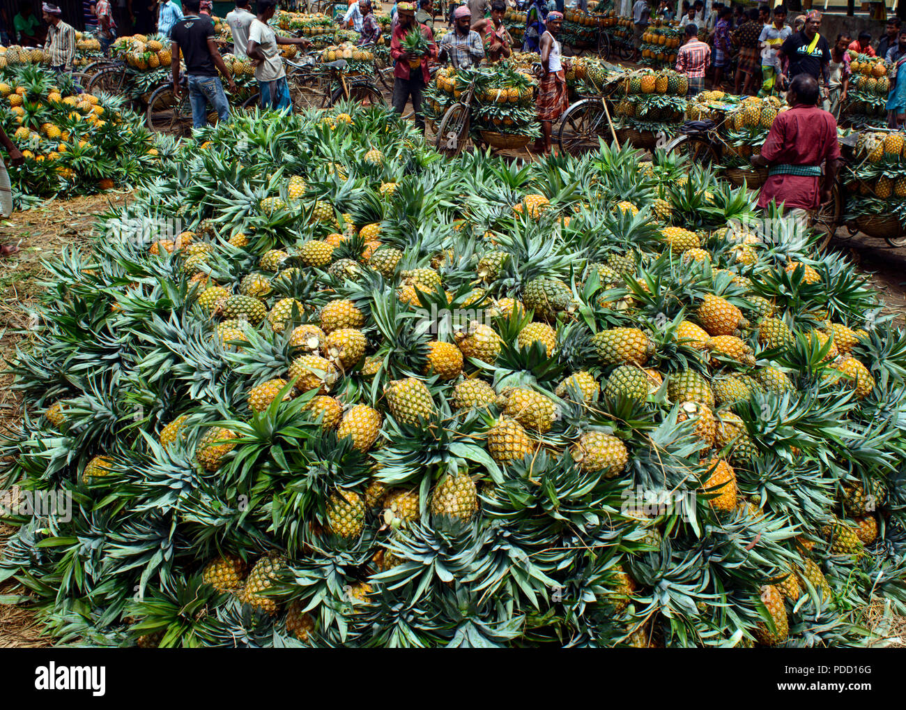 pineapple - Stock Image
