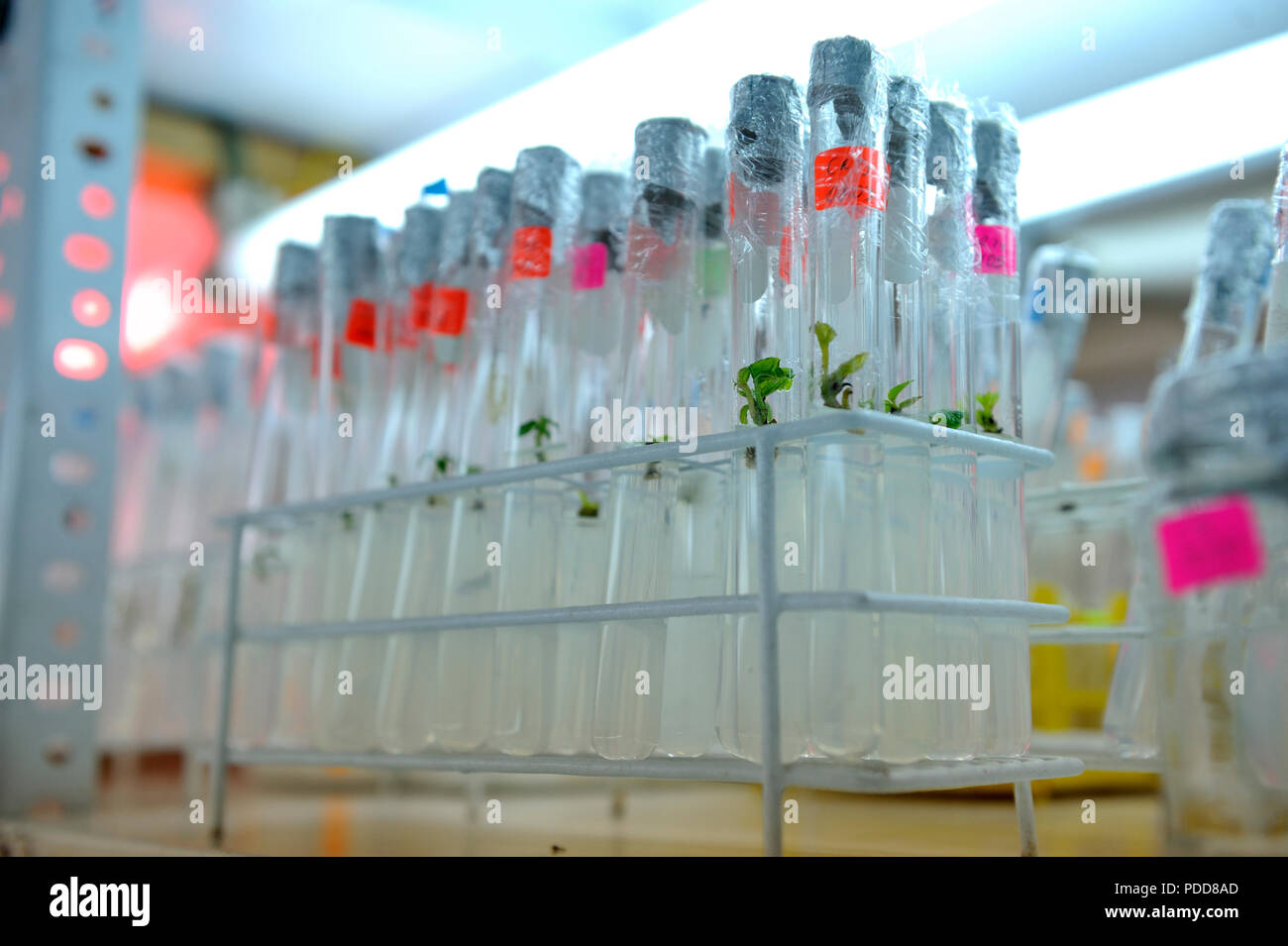 Close up row of glass bottle plant tissue culture on shelf in laboratory. Stock Photo