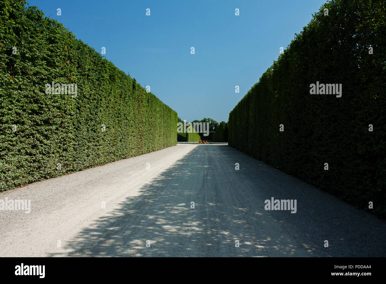 Trimmed grim walls from the labyrinth in Palace of Versailles garden, summer - Stock Image
