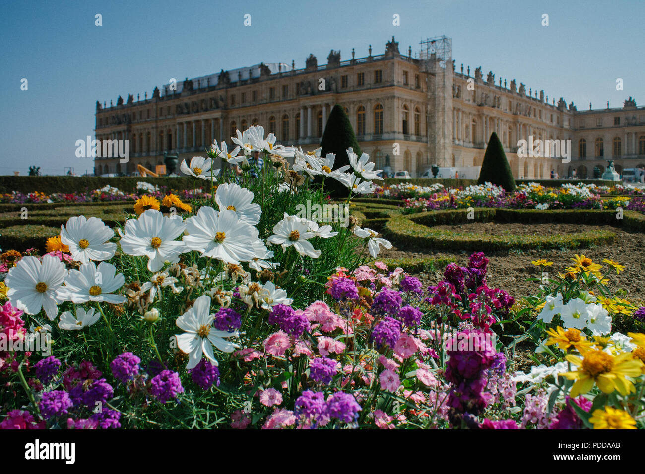 Gardens Of Versailles Flowers 6