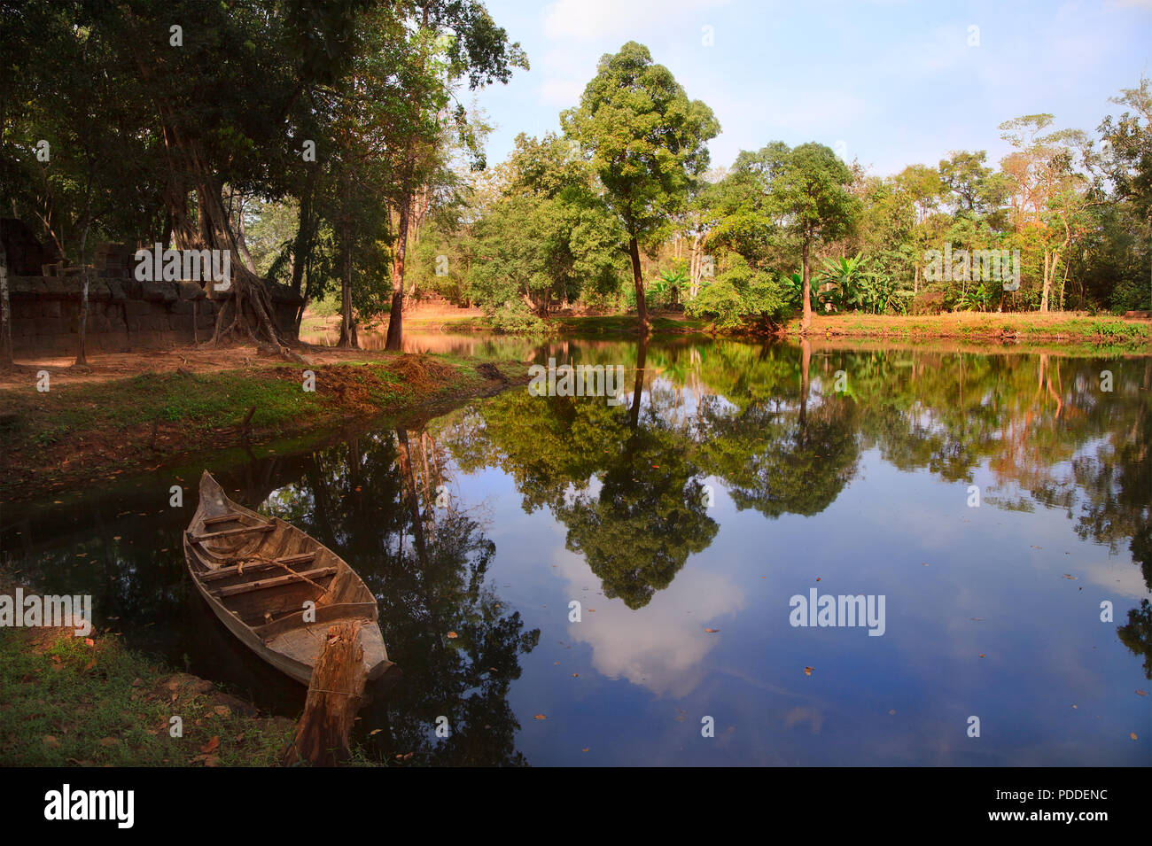 Jungle at the walls of the ancient Khmer temple in Koh Kher national Park, Cambodia - Stock Image