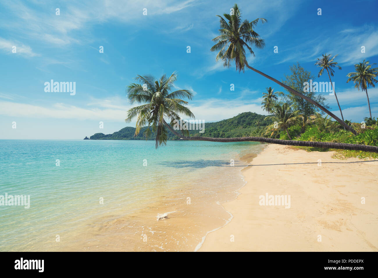 Coconut palm tree over summer beach sea in Phuket ,Thailand. Summer, Travel, Vacation and Holiday concept - Stock Image