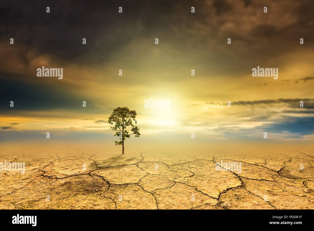 Tree dry soil texture background - Stock Image