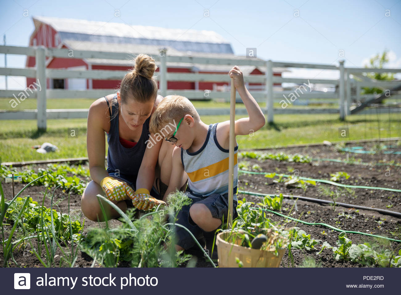 Mother and son gardening in sunny rural garden - Stock Image