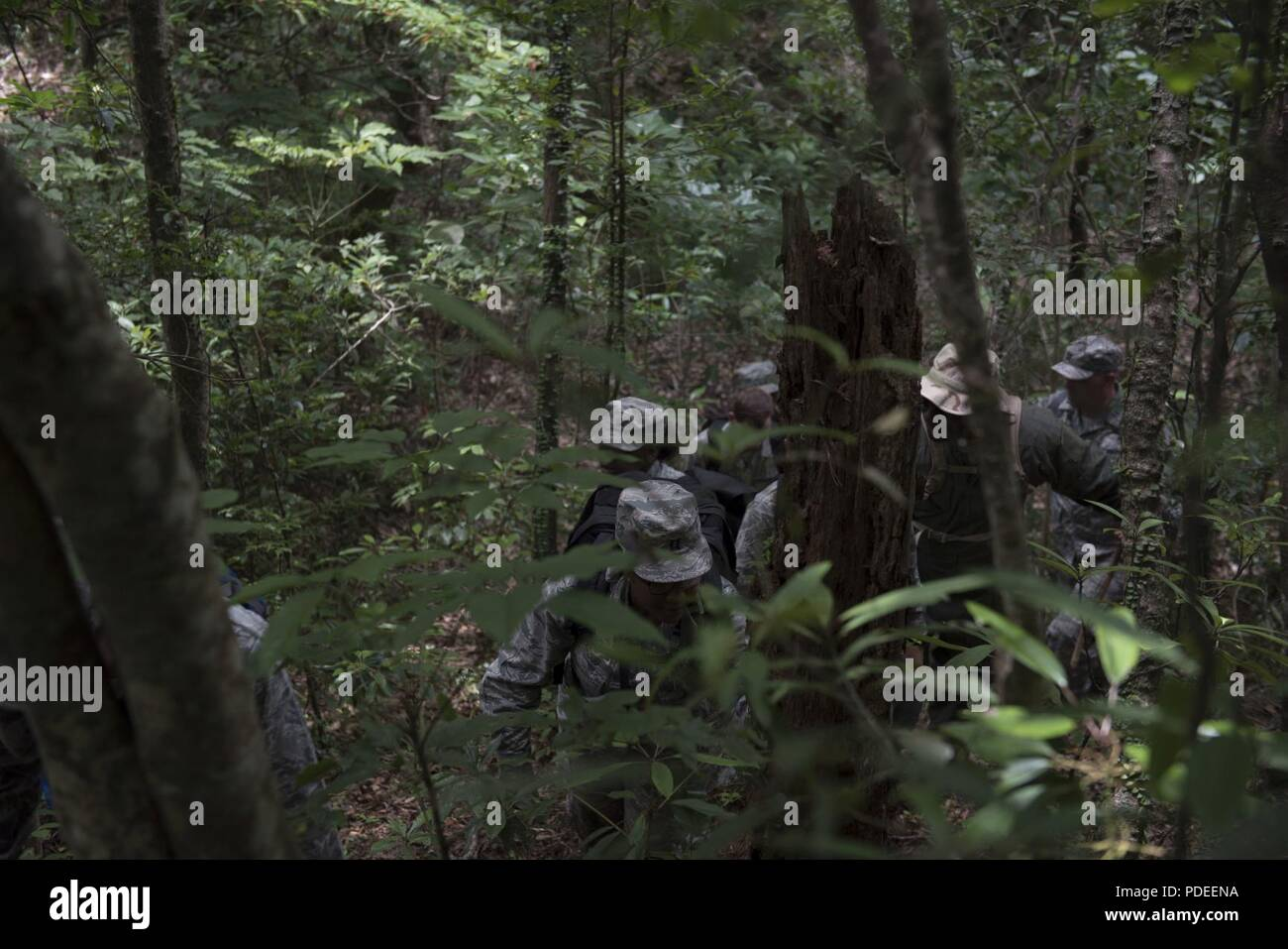 Medics of the forest: which representatives of the animal world clean the nature 96