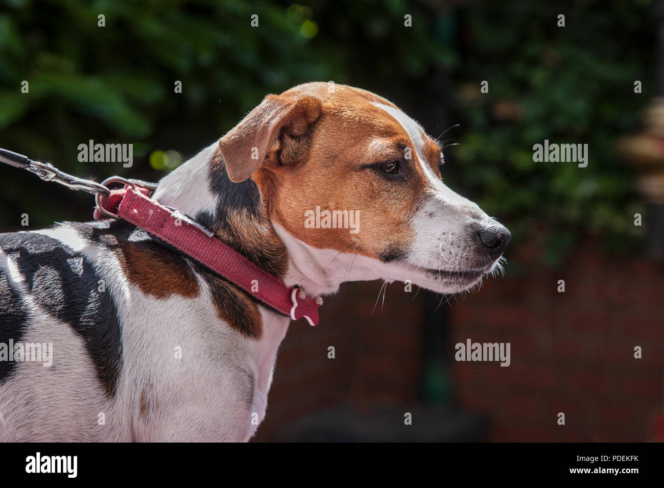 Family pets - Stock Image