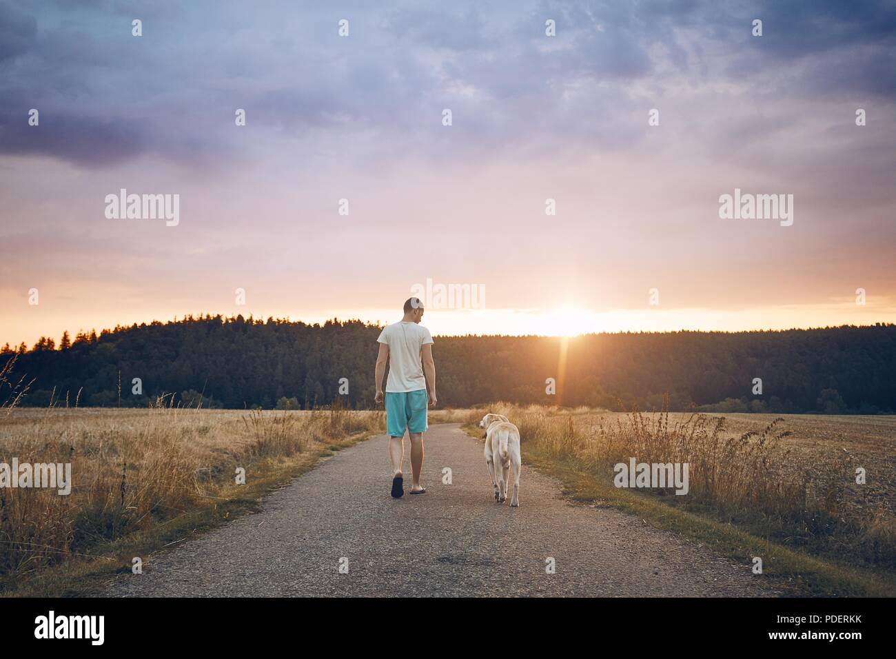 Rear view of the young man walking with his dog (labrador retriever) on the rural road at sunset. - Stock Image