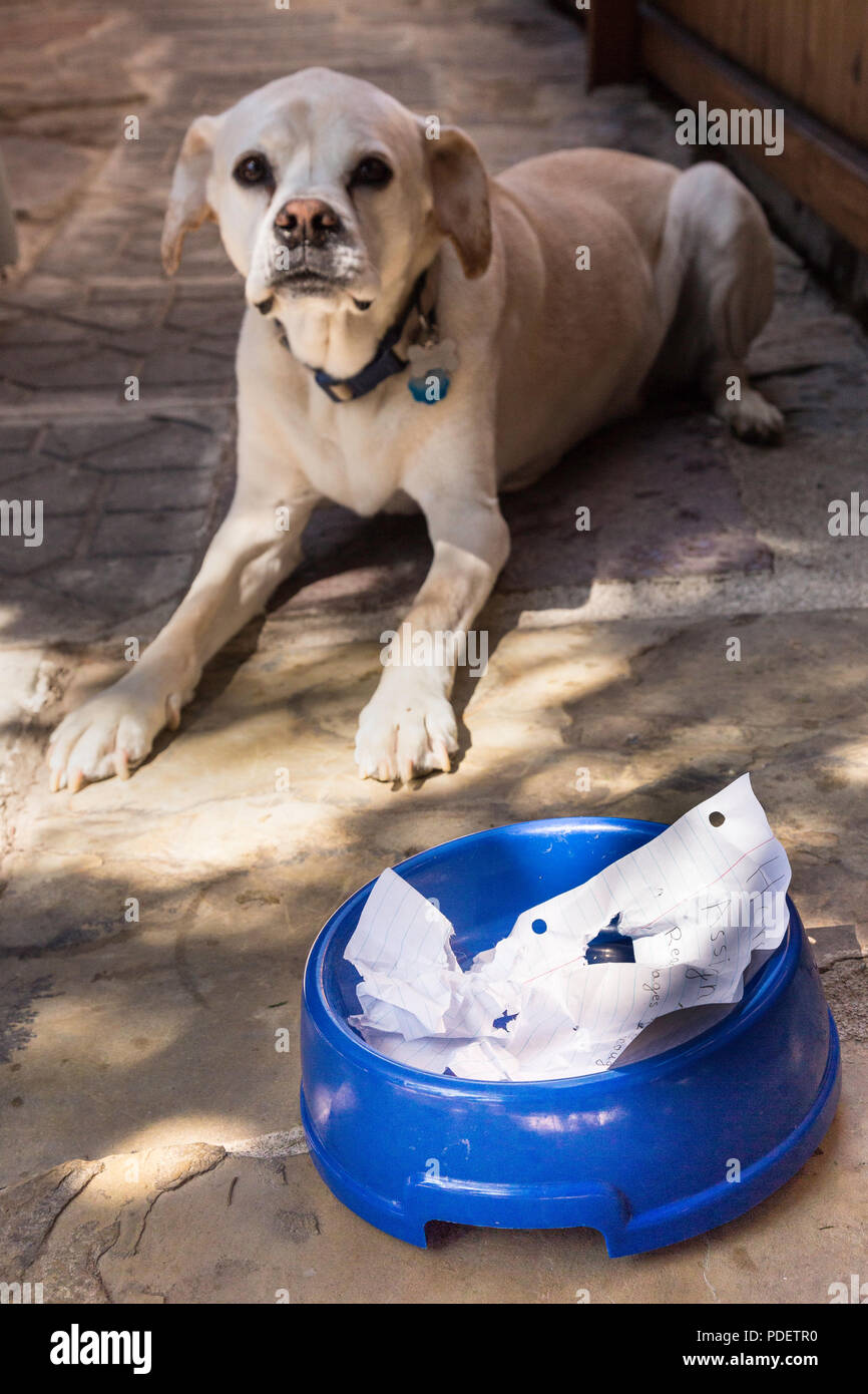 'Dog ate my homework' excuse, USA - Stock Image