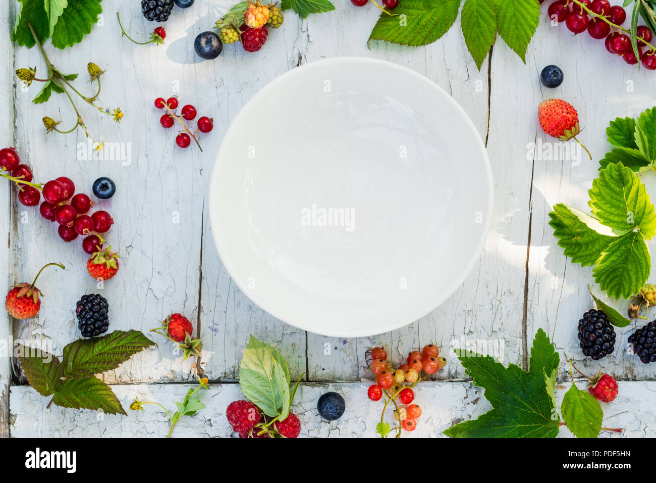 White empty plate on sunny background with berries - Stock Image