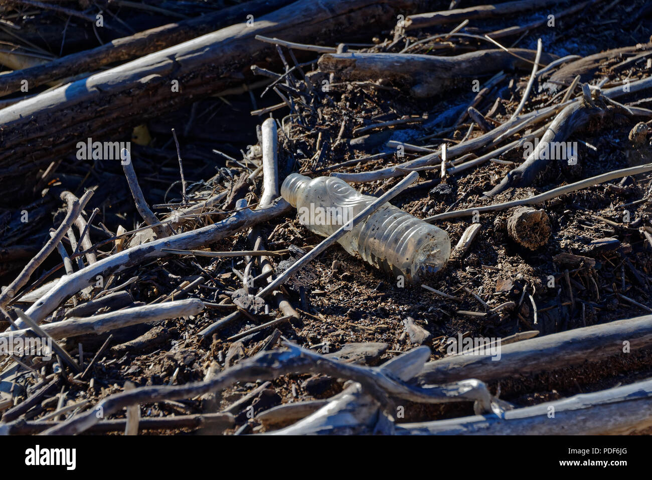 Plastic bottle caught in driftwood on coast of New Zealand.  Plastic rubbish in our oceans is a worldwide environmental problem. - Stock Image
