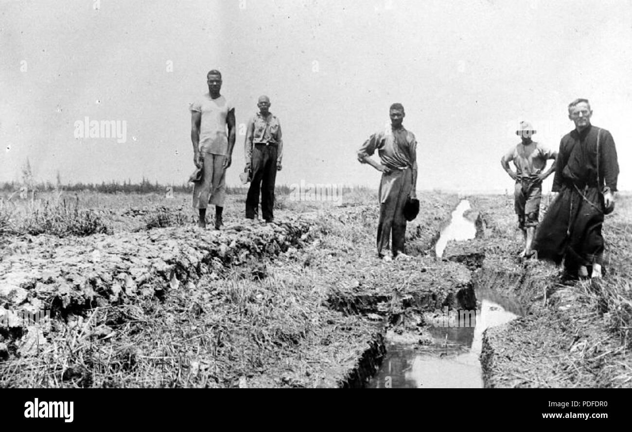 110 De rijstpolder van de Missie te Suriname - Collectie stichting Nationaal Museum van Wereldculturen - TM-10018904 - Stock Image