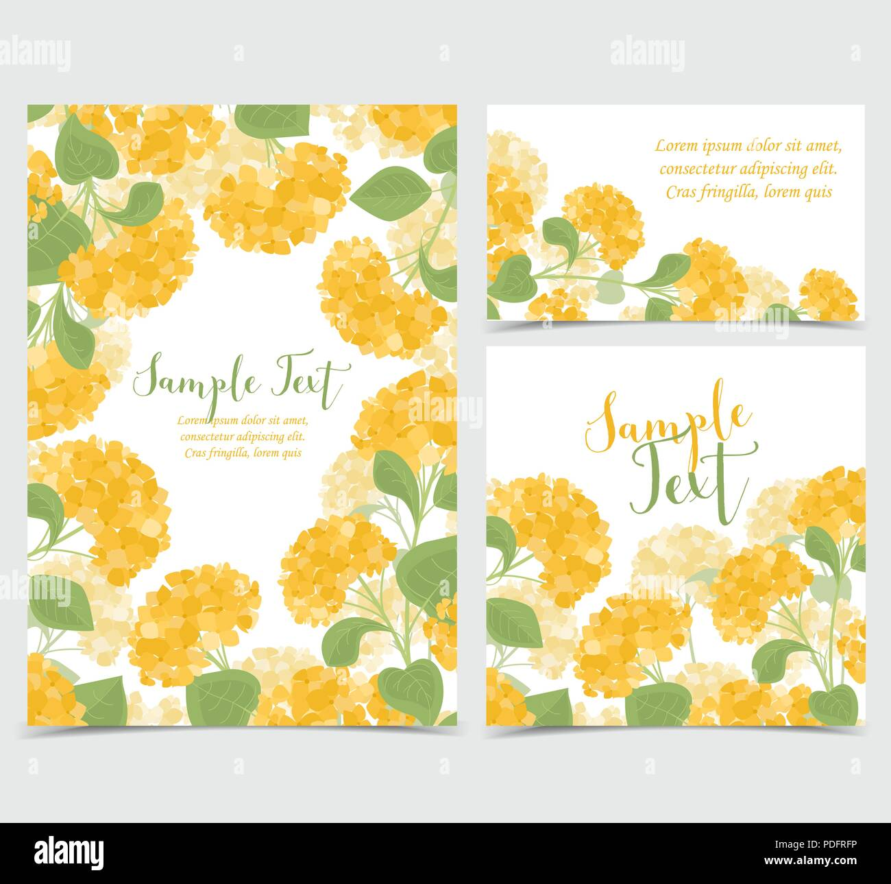 set vector illustration of hydrangea flower background with yellow
