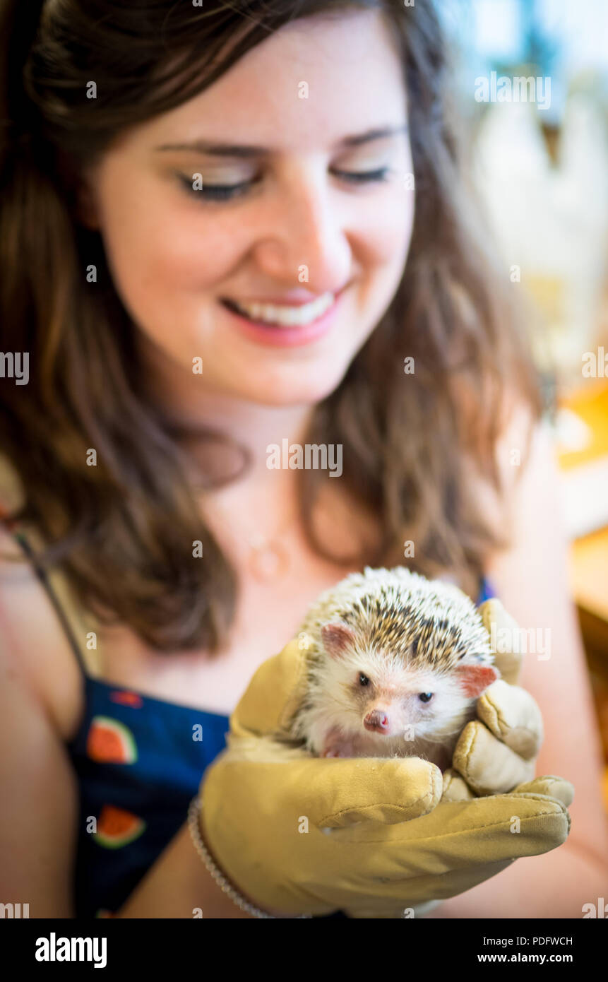 A happy girl holds a hedgehog at Hedgehog Cafe Harry, a hedgehog cafe in Harajuku, Tokyo, Japan. - Stock Image