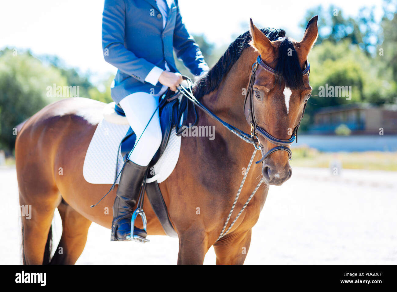 Man enjoying horse riding doing it on nice warm summer day - Stock Image