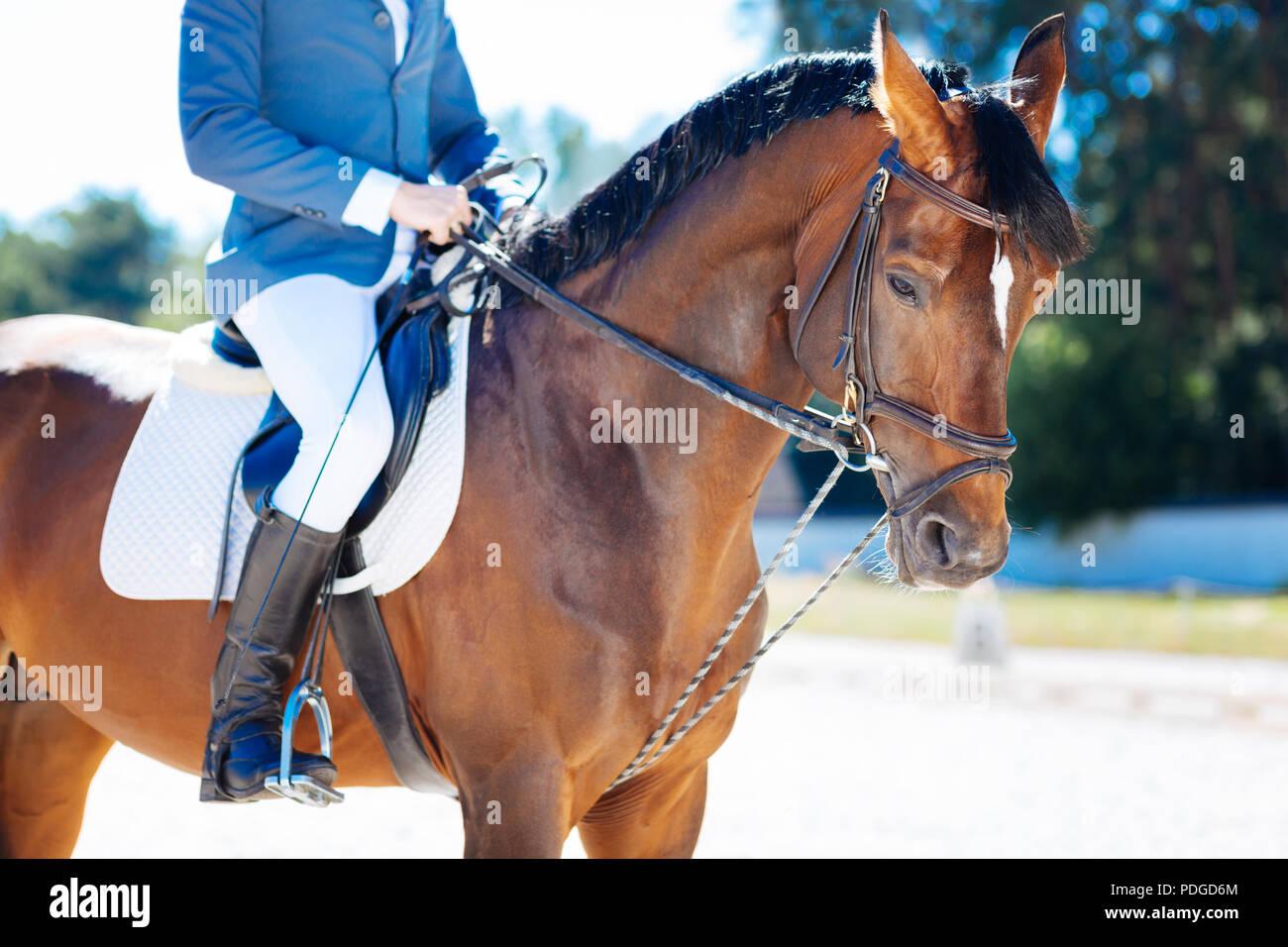 Experienced a horseman enjoying his favorite activity - Stock Image
