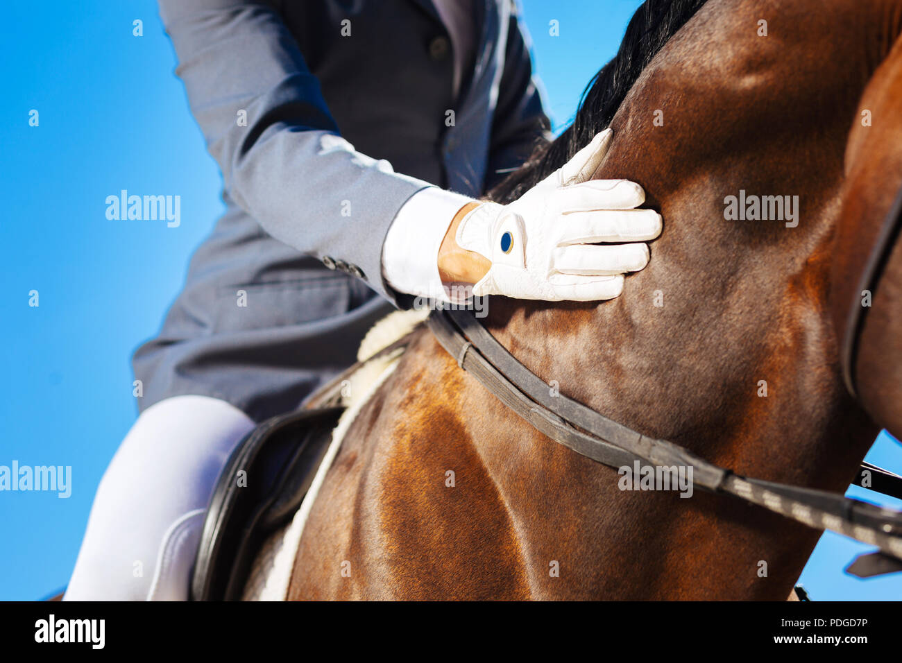 Kind-hearted horseman petting his beautiful dark horse - Stock Image