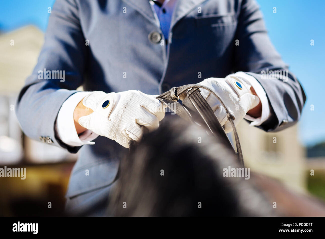 Sportsman wearing blue gloves getting ready for horse riding - Stock Image