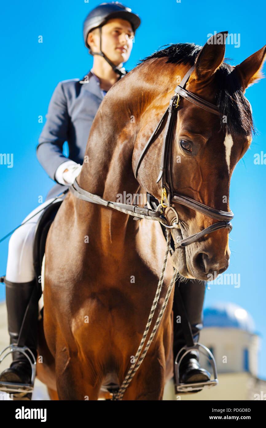 Gentle horseman riding dark-eyed saddle horse Professional racehorse. - Stock Image