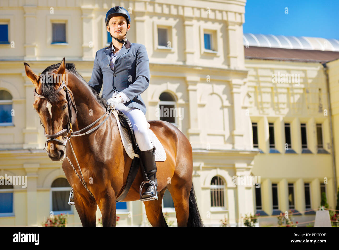 Handsome professional equestrian doing his favorite occupation - Stock Image