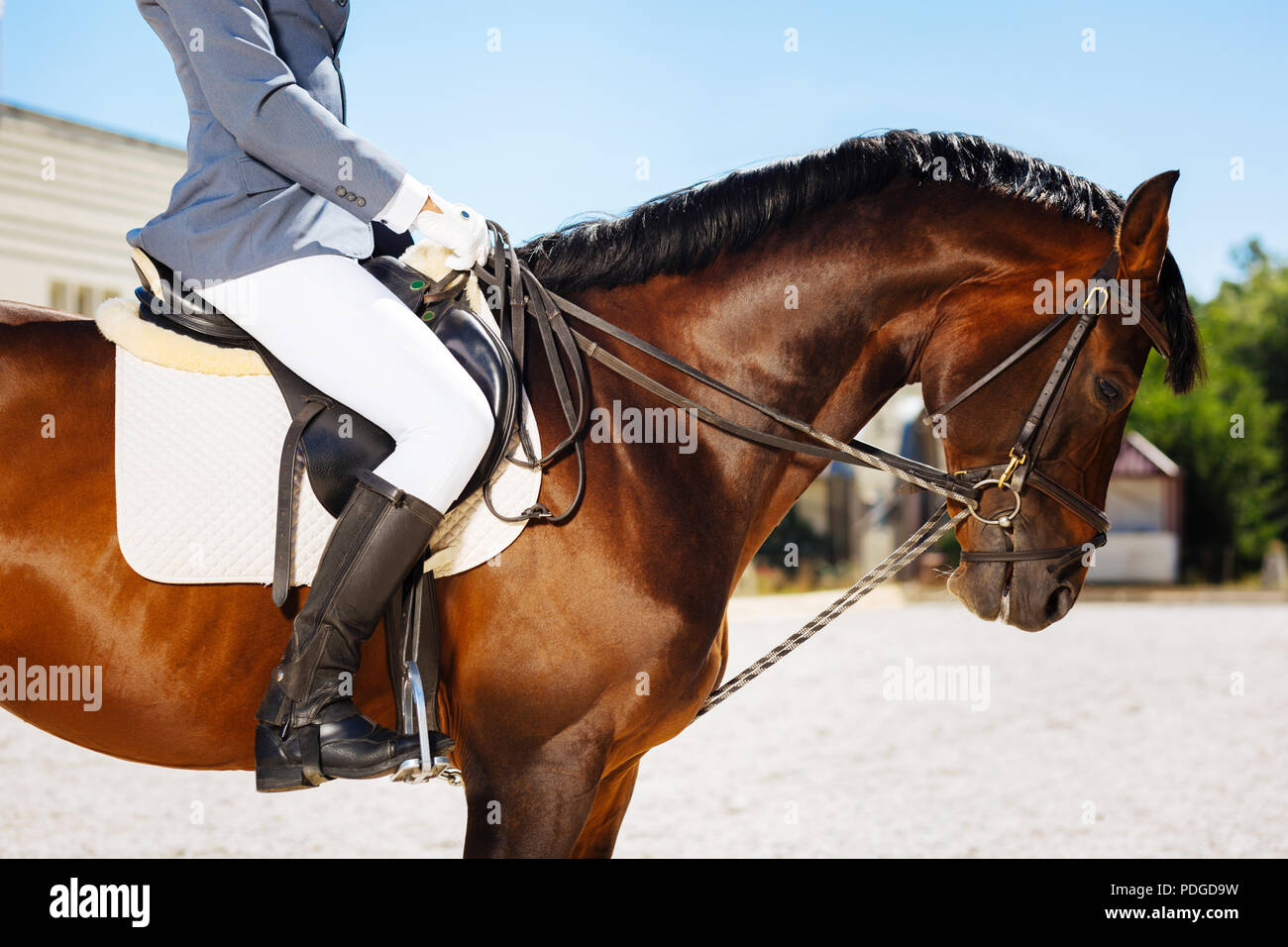 Gentle man wearing blue gloves and black riding boots - Stock Image