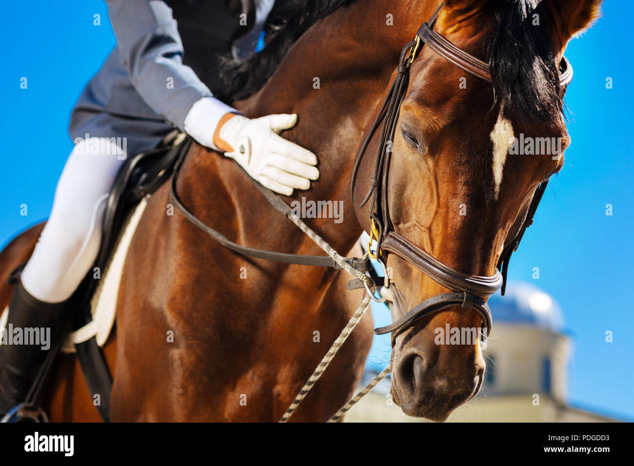 Caring equestrian calming his favorite horse before horserace - Stock Image