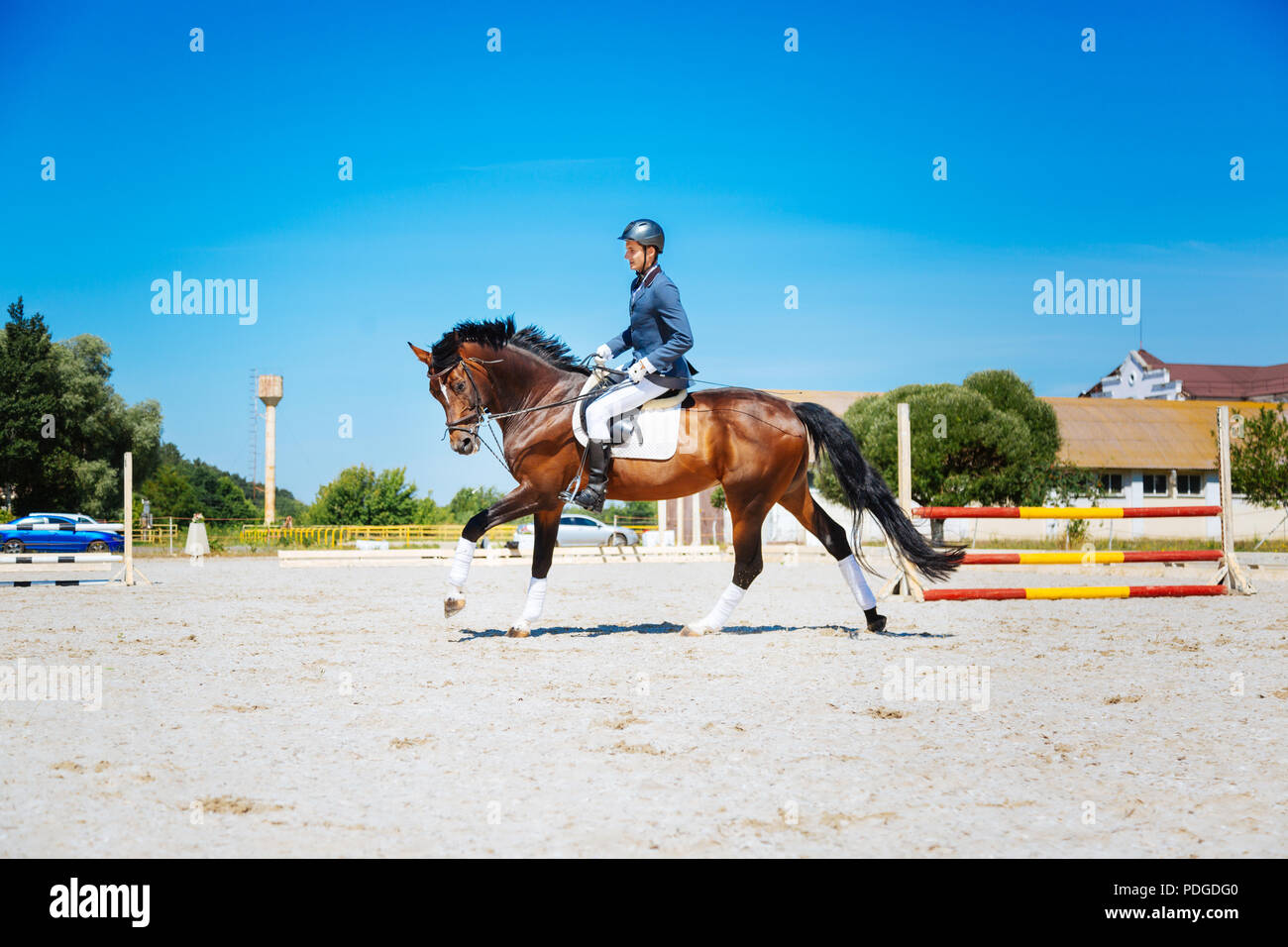 Promising equestrian riding his brown horse very fast - Stock Image