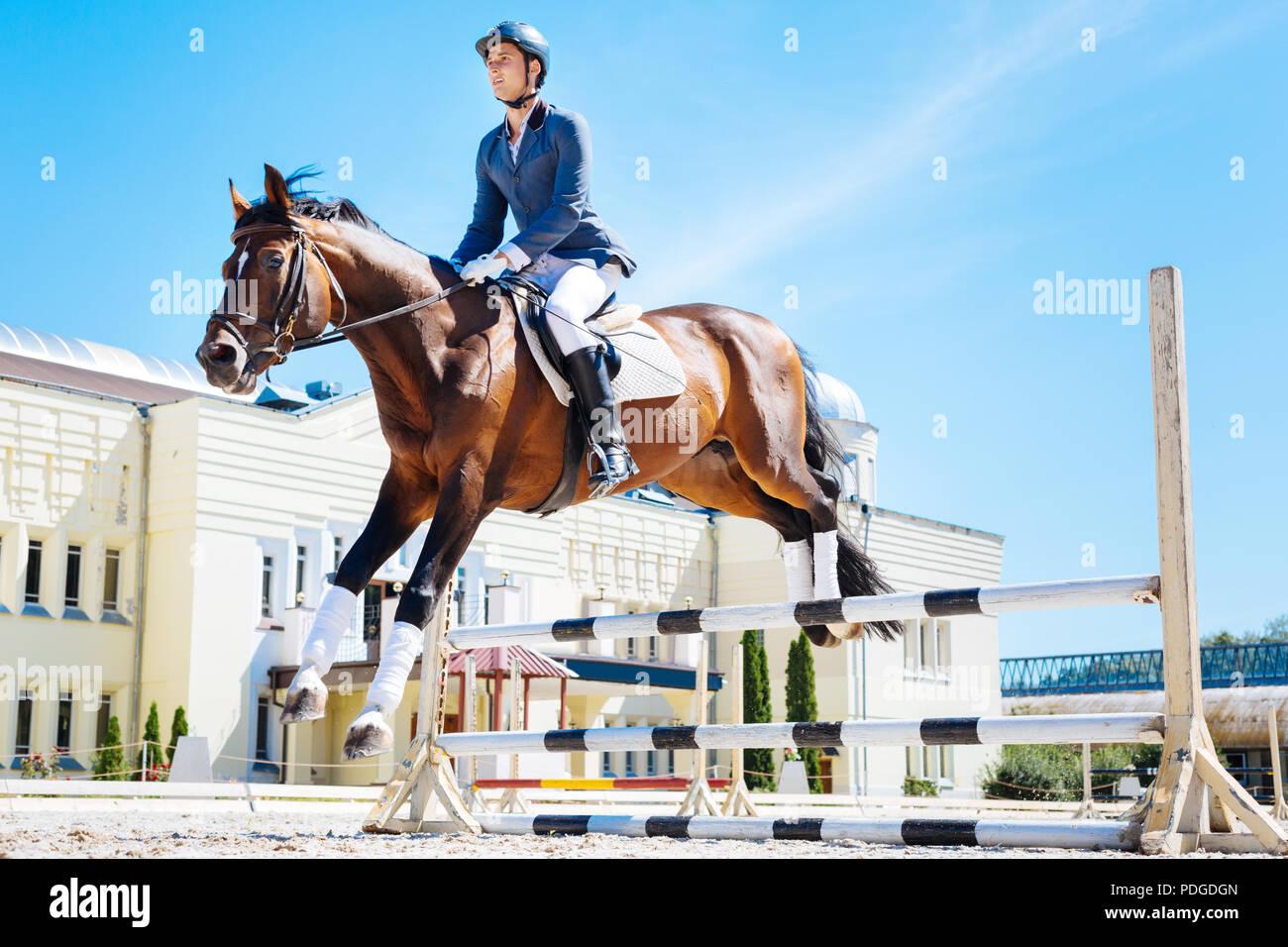 Professional dark brown racehorse hurdling very fast - Stock Image