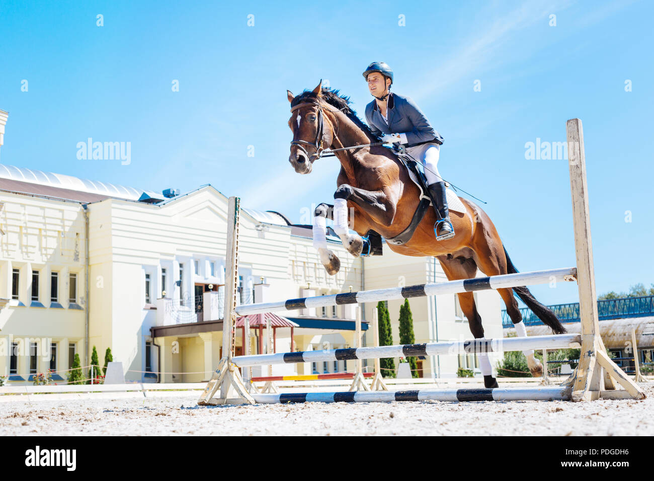 Horse man wearing blue jacket feeling excited while horse hurdling - Stock Image