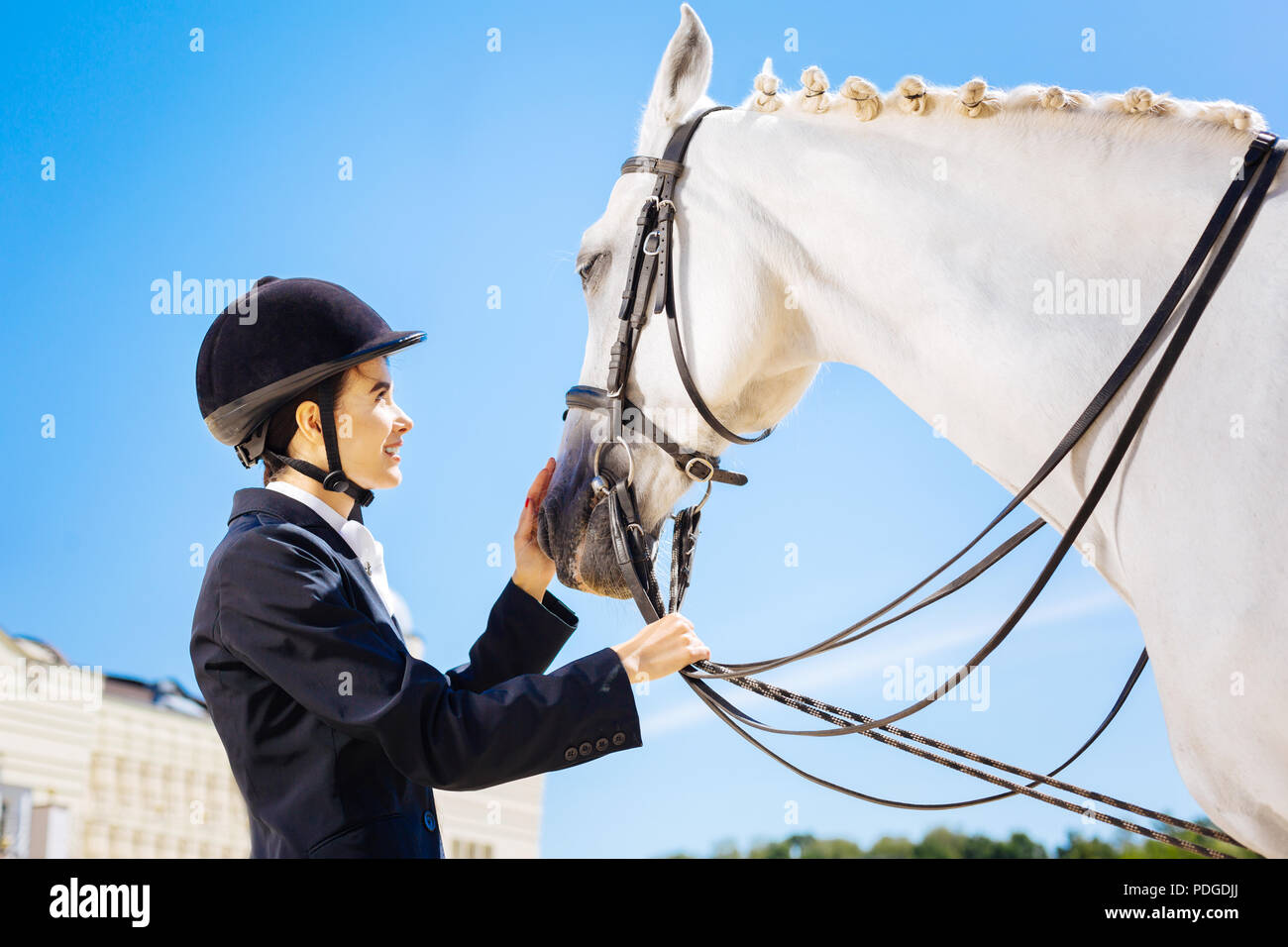 Female rider wearing black helmet looking at white horse - Stock Image
