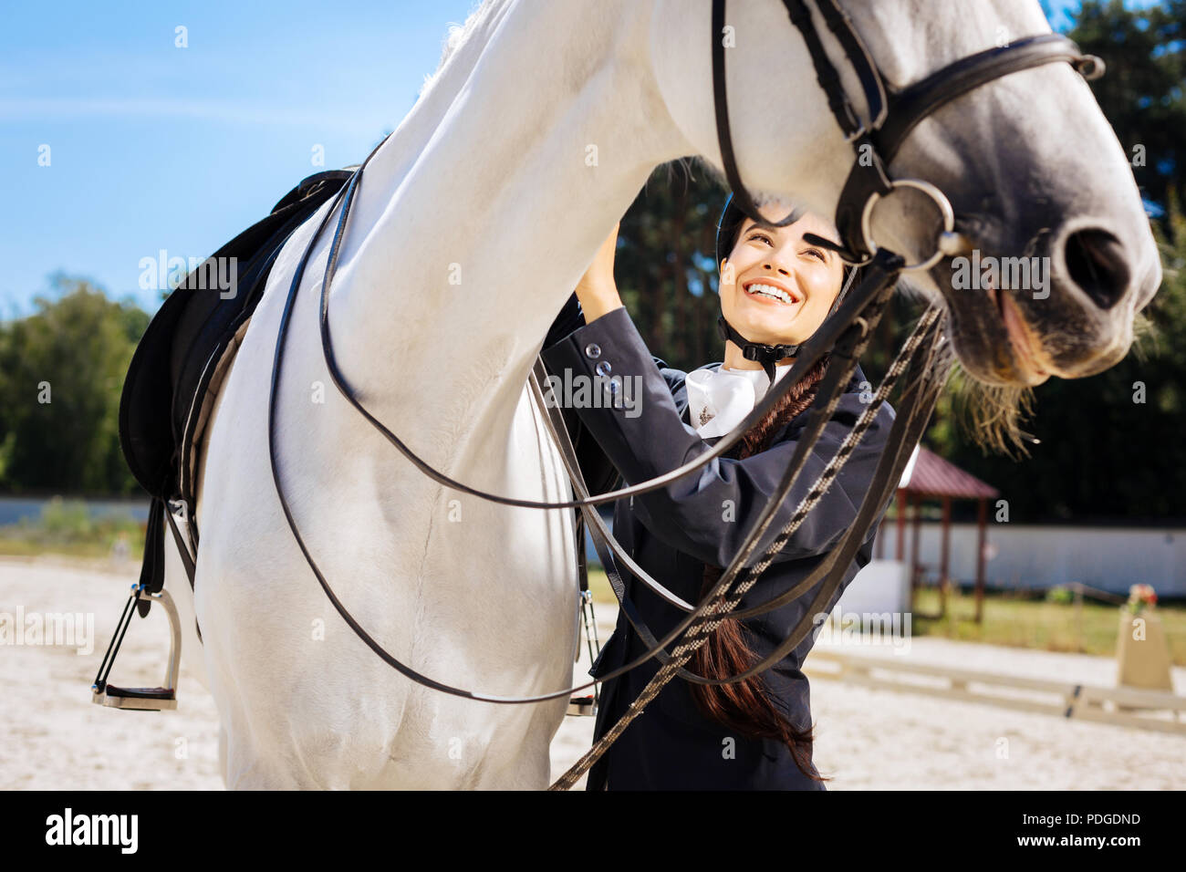 Dark-haired female rider with long braid taking care of her horse - Stock Image