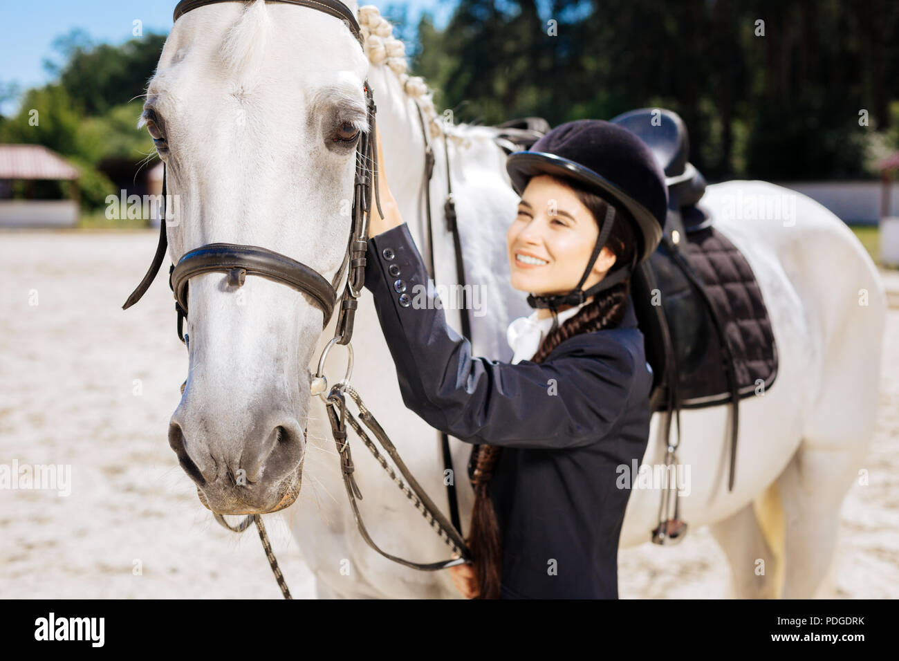 White racing horse standing submissively near his female owner - Stock Image