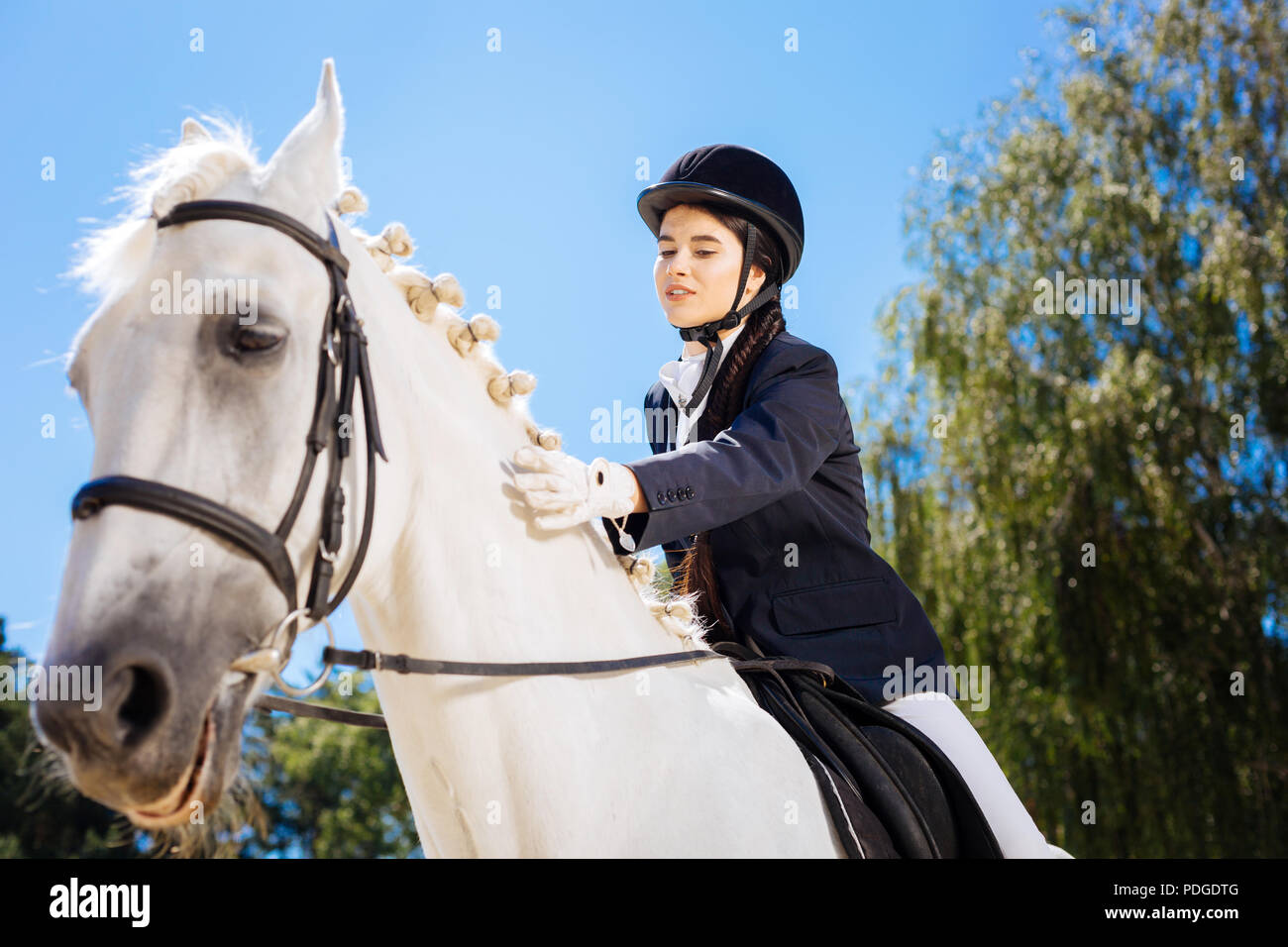 Loving horsewoman petting her gentle white horse - Stock Image
