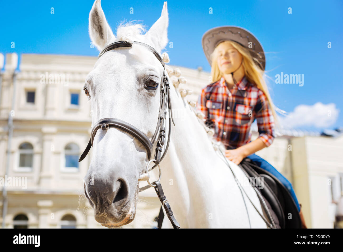 White racing horse standing submissively with girl on him - Stock Image