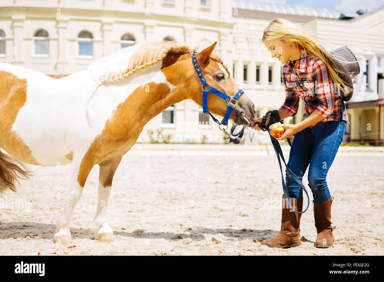 Caring schoolgirl coming to stable for feeding little pony - Stock Image