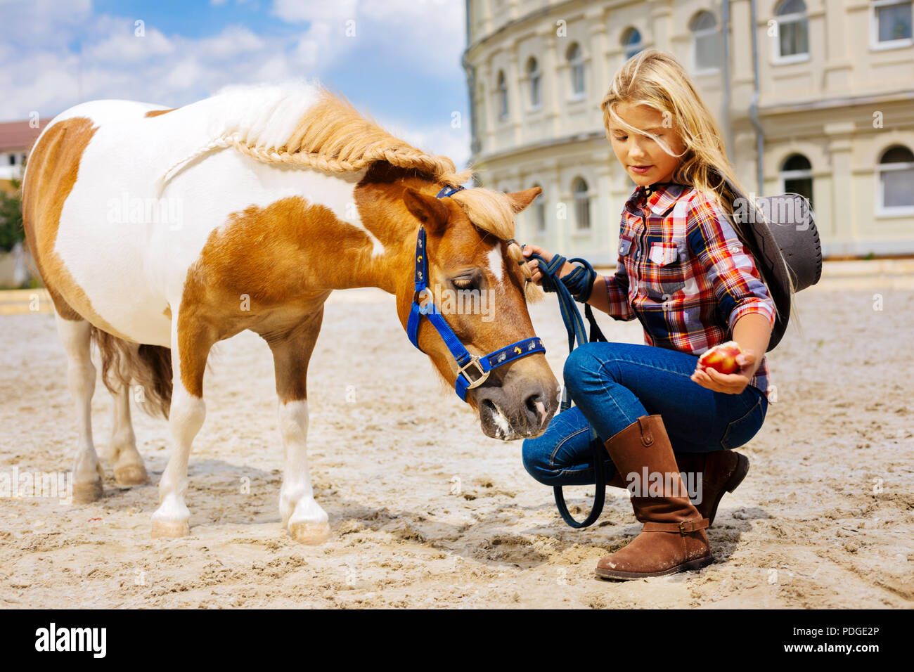 Cute girl wearing brown leather riding boots feeding horse - Stock Image