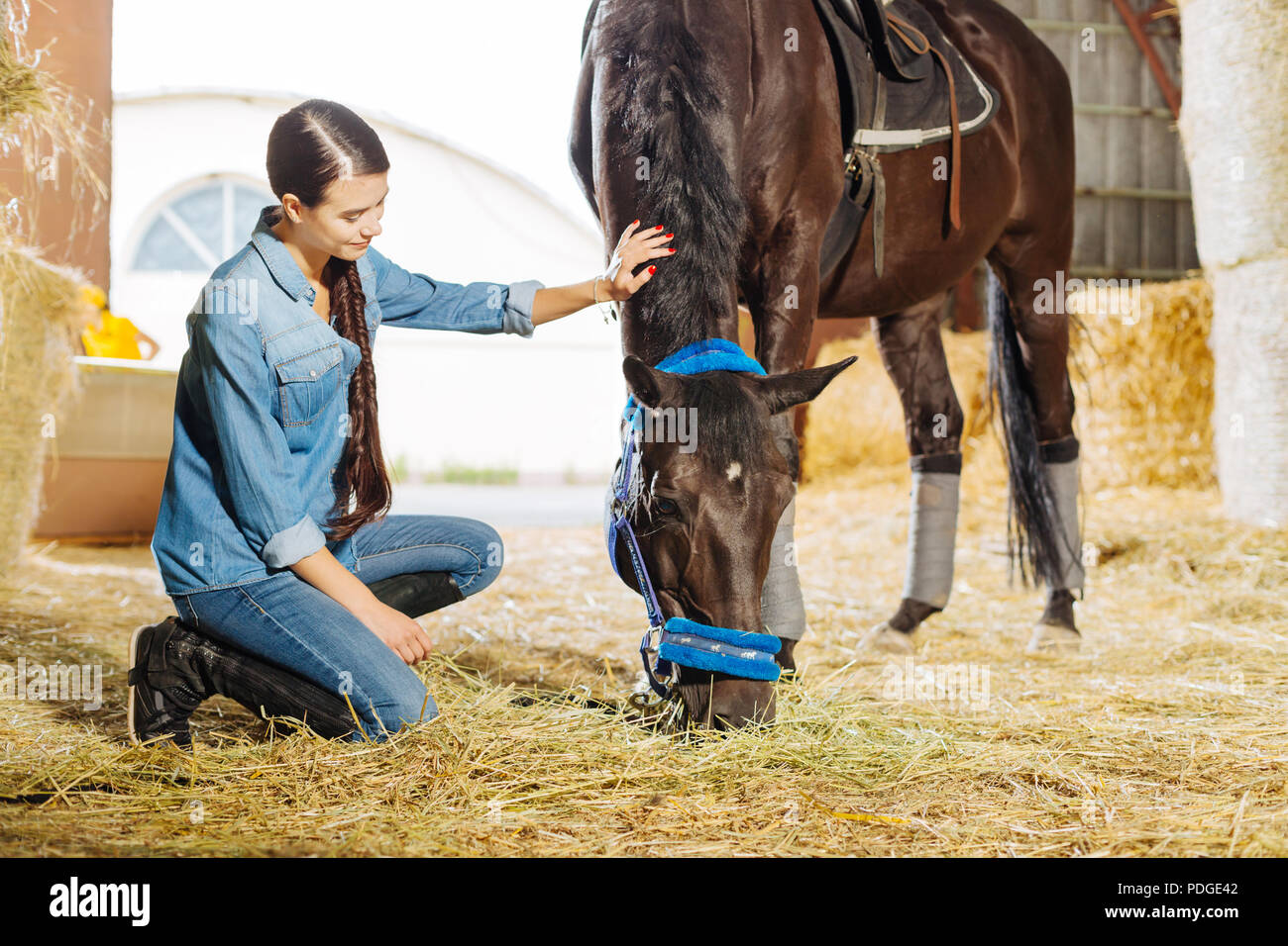 Dark-haired horsewoman with long braid visiting stable and horse - Stock Image