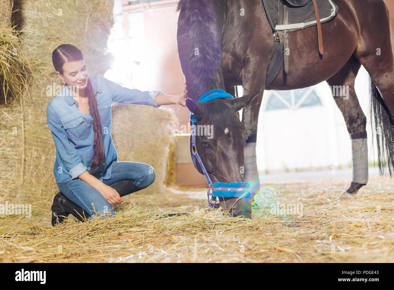 Horsewoman wearing denim clothes petting beautiful dark horse - Stock Image