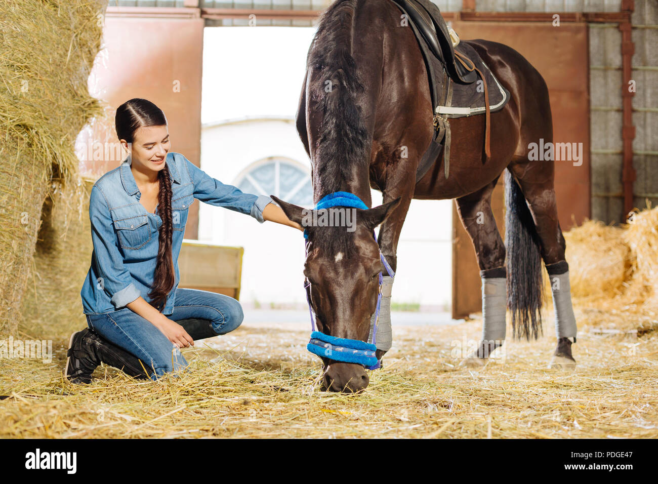 Beaming dark-haired female rider visiting her lovely horse - Stock Image