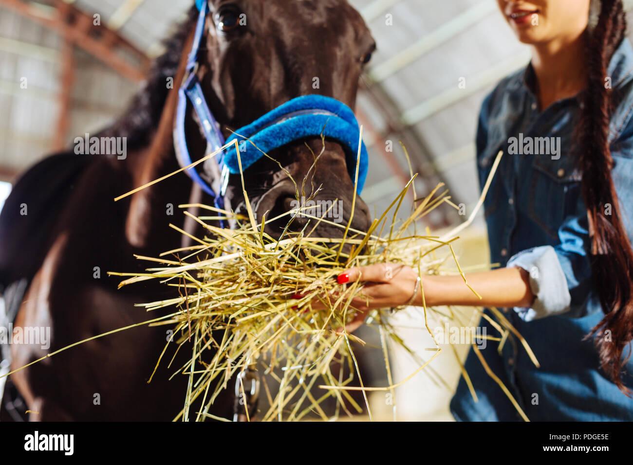 Caring horsewoman feeling lovely while feeding her horse - Stock Image