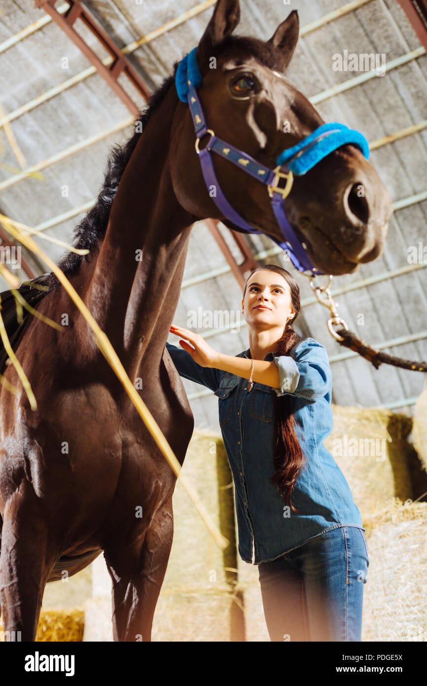 Horsewoman smiling broadly while cleaning her big dark horse - Stock Image