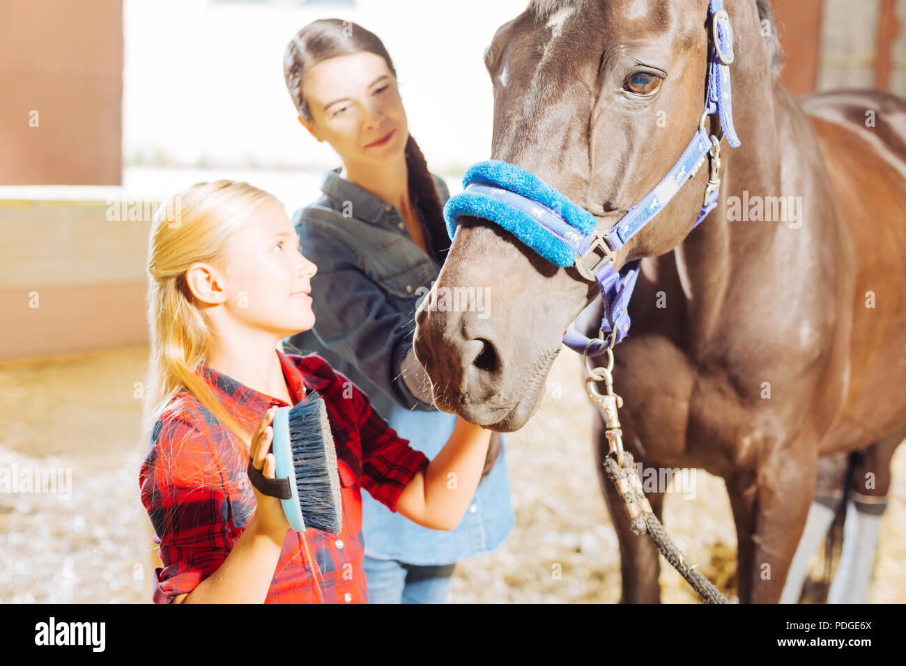 Blonde-haired daughter joining her mother while cleaning horse - Stock Image