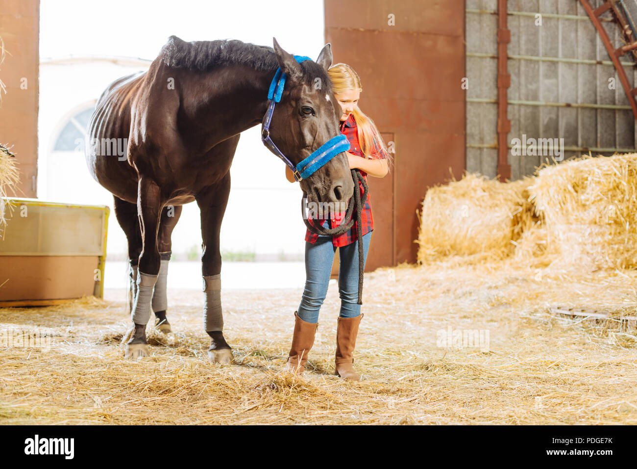 Blonde-haired schoolgirl leaning on beautiful dark horse - Stock Image