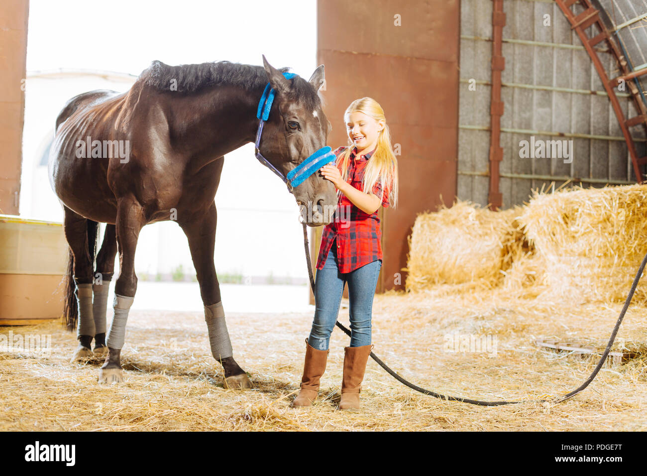 Schoolgirl laughing while playing with big dark horse - Stock Image