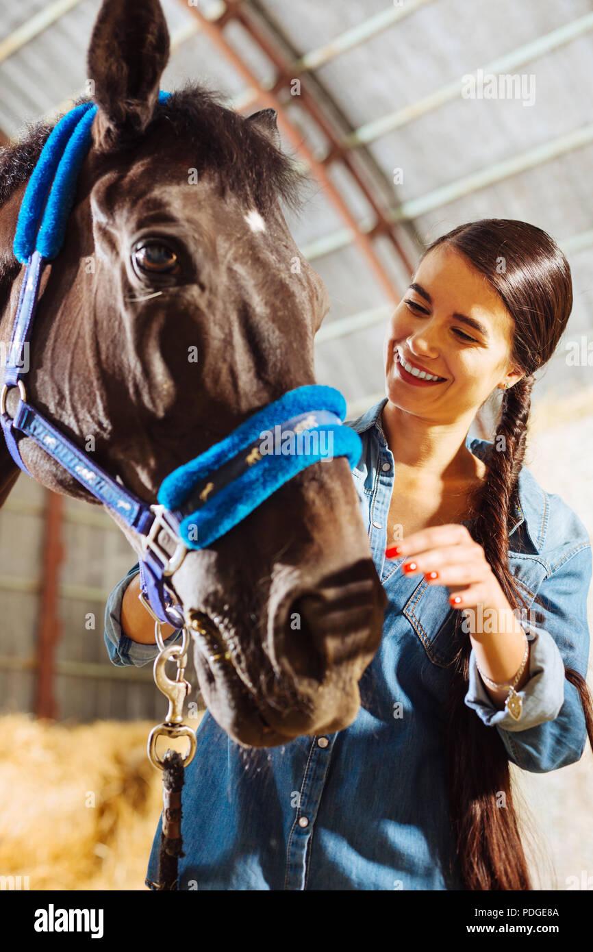 Appealing beaming woman wearing denim shirt touching horse - Stock Image