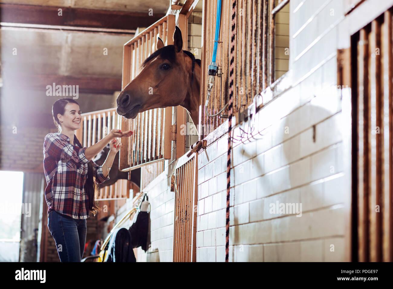 Woman feeling entertained while feeding beautiful horse - Stock Image