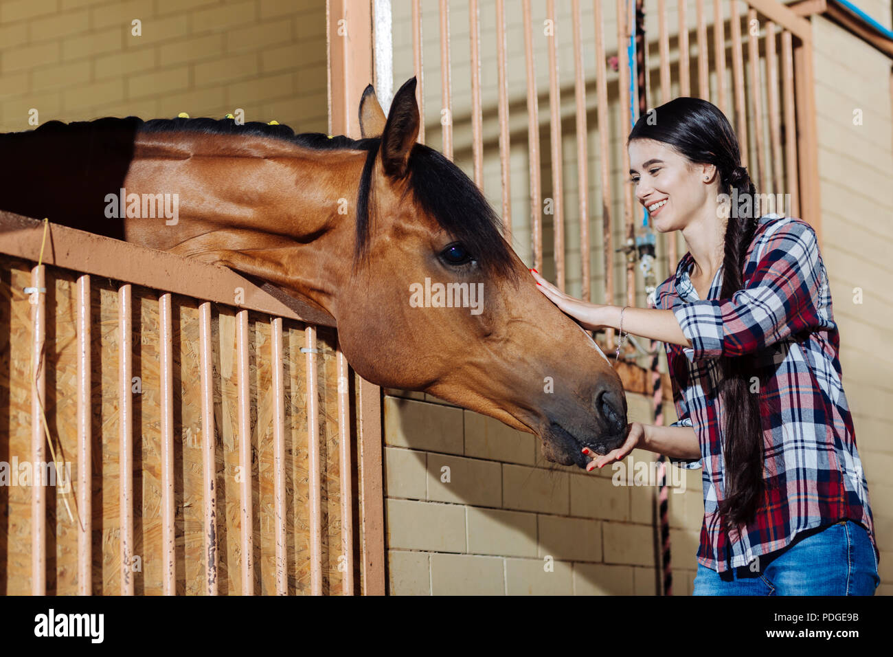 Young horsewoman standing in stable and petting dark horse - Stock Image